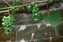 21 Wein/Wine