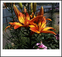 5 Blume/Flower