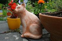 5 Katze im Garten/Cat in garden