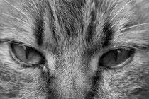12 Kater Mosche/Cat Mosche