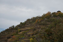 143 Weingebirge im Herbst/Mountains with vine in autumn