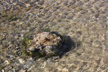 43 Stillleben im Wasser/Still life in the water