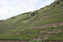 117 Weingebirge/Mountains with vine