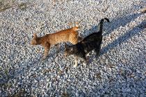 63 Zwei Katzen/Two cats