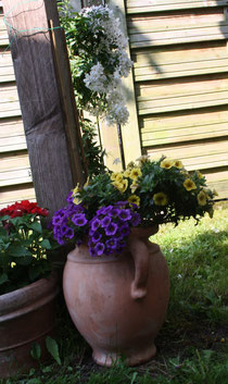 68 Blumentopf+Petunien/Pot with petunias