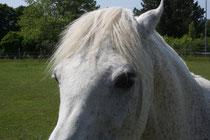 9 Pferdeaugen/Horse eyes