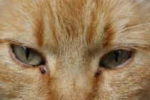 23 Kater Mosche/Cat Mosche
