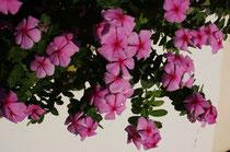 161 Blumen/Flowers