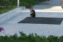 82 Katze/Cat