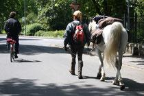 7 Reiter und Pferd/Rider and Horse