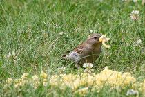 8 Vogel mit Nudel/Bird with noodles