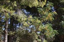 103 Bäume/Trees