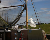 185 Seemöwe/Seagull