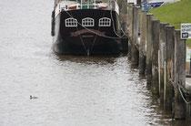 81 Schiff+Ente/Ship+Duck