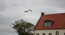 88 Seemöwe/Seagull