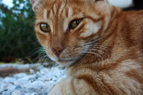 93 Katze/Cat
