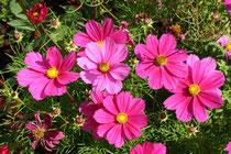 3 Schmuckkörbchen/Jewelry basket flower
