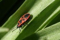 23 Ein Käfer/A beetle