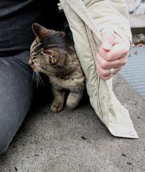 6 Katze schmust/Cat smooch