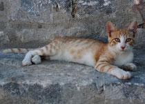 18 Eine junge Katze/A young cat