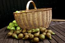3 Ernte von Birnen und Äpfeln/Harvest of apples and pears