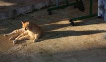 87 Katze/Cat