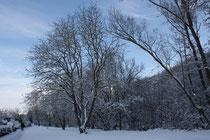 9 Bäume/Trees