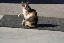 83 Katze/Cat