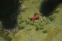 10 Ein Pferd/A horse