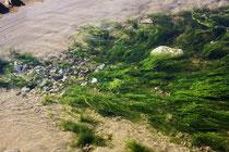 52 Stillleben im Wasser/Still life in the water