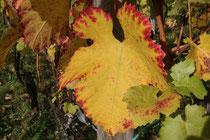 45 Weinblatt/Vine leaf