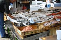 6 Fisch von Kreta/Fish from Crete
