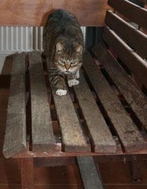 3 Katze auf der Bank/Cat on a bench