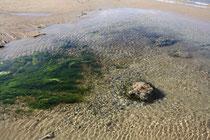 40 Stillleben am Strand/ Still life at the beach