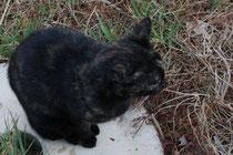 80 schlafende Katze/Sleeping cat