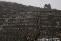87 Weingebirge/Mountains with vine