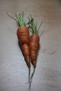 12 Karotte/Carrot