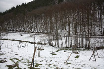 114 Die Lanschaft/The landscape