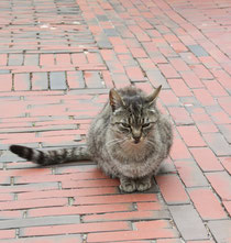 65 Eine Hauskatze in Greetsiel/A cat in Greetsiel