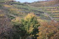 165 Weingebirge im Herbst/Mountains with vine in autumn
