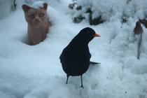 121 Amsel und Katze/Blackbird an cat