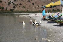 13 Gänse und Enten/Geese and ducks