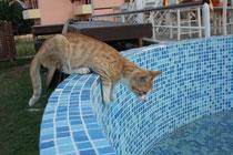 86 Eine kleine Katze/A little cat
