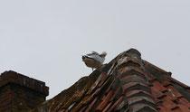 187 Seemöwen auf einem Dach/Seagulls on a roof