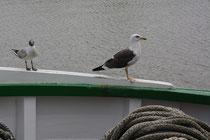 6 Eine Seemöwe auf einem Schiff in einem Hafen/A seagull on a Ship in a harbor