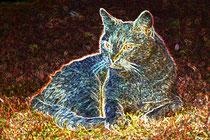 2  Leuchtender Kater/Luminous tomcat
