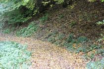 30 Waldweg/Forest track
