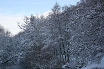 8 Bäume/Trees