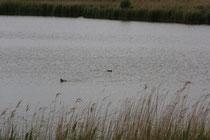143 Vögel+See/Birds+Lake