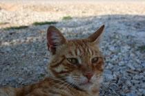 54 Kater/Tomcat